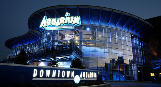 Curious Facts About Animals You NEVER THOUGHT You'd Find At Denver's Downtown Aquarium